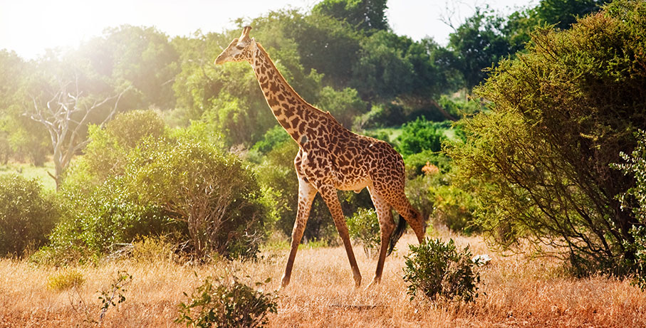 Annorlunda upplevelse bland vilda djur